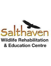 Salthaven logo