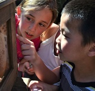 kids looking at bees