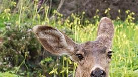 Wildlife Storytimes