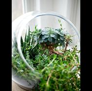 photo of a small terrarium
