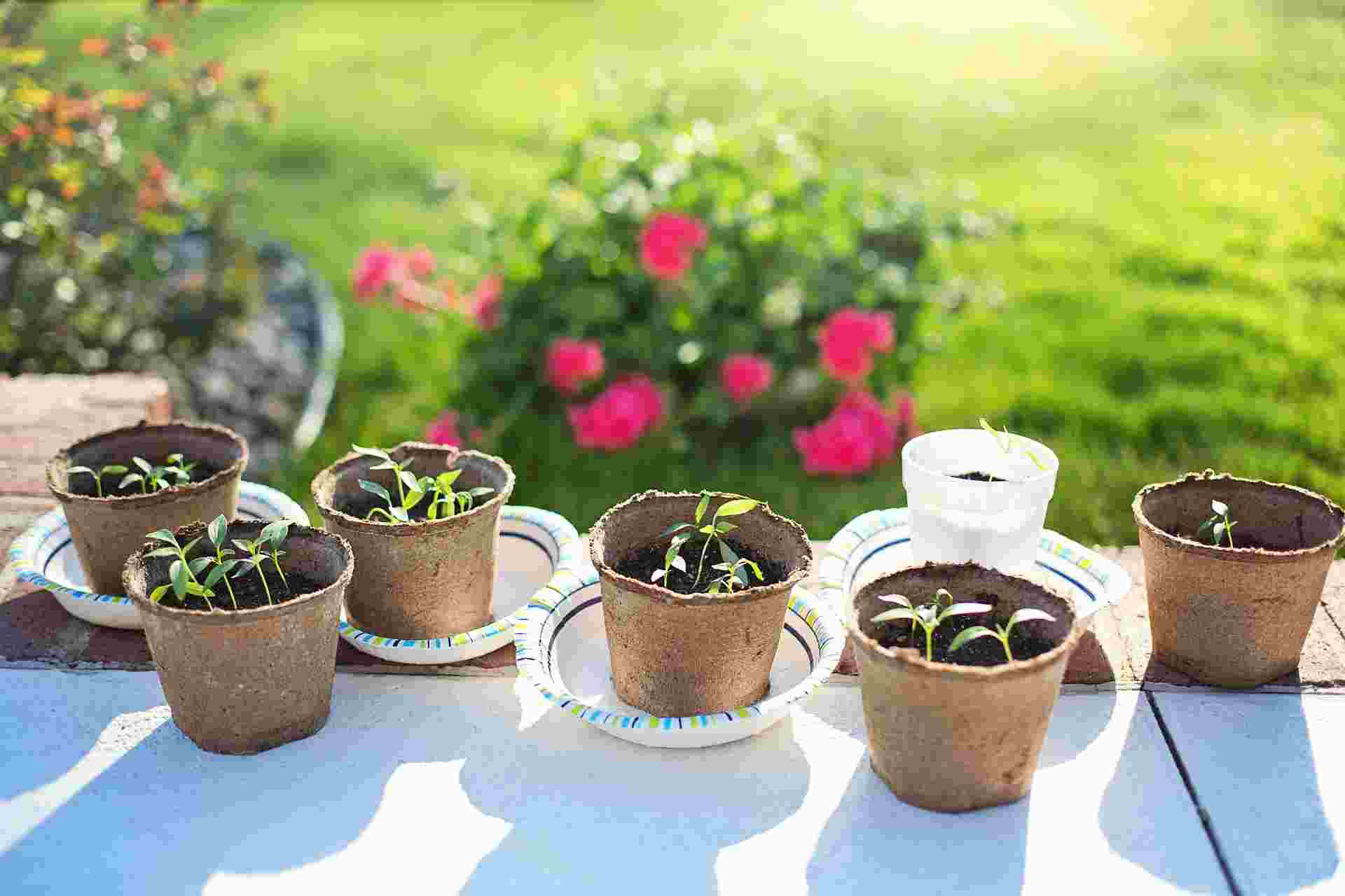 Gardening Workshop for Teens
