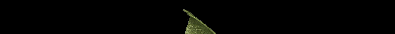 a green winged dragon in flight