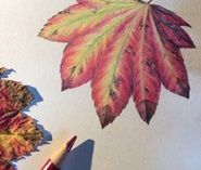 A photo of a drawing of a leaf in colored pencil