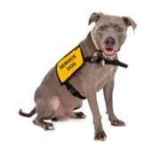 Service Animal Awareness
