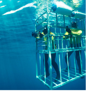 Divers in a shark cage in the ocean