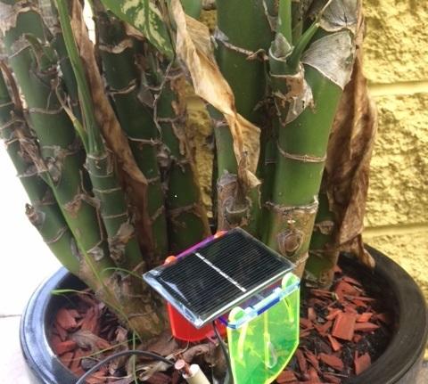 Thirsty plant gadget